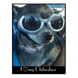 Chi Dog Postcard
