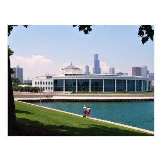 Chicago Shedd Aquarium collection Postcard