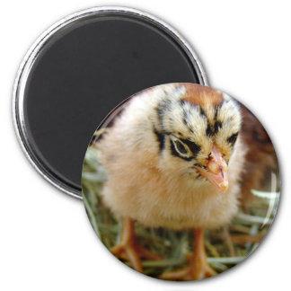 Chick 2 Inch Round Magnet