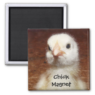 Chick Magnet - Cute Chick Photo