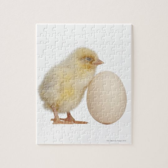 Chick with egg (2 days old) jigsaw puzzle