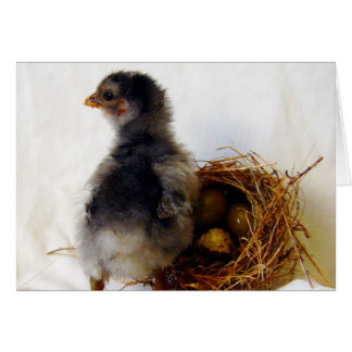Chick With Nest Card