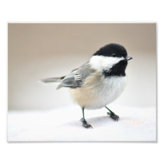 Chickadee close up photo print