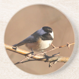 Chickadee Coaster