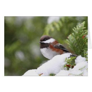 Chickadee in Snow on a Cedar Tree Card