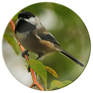 Chickadee Looking In Porcelain Plate