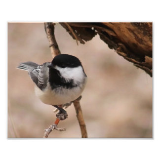 Chickadee Photo Print