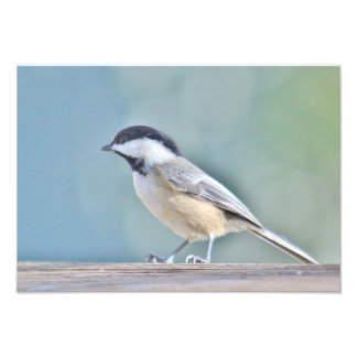 Chickadee photography photo print
