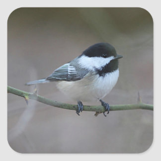 Chickadee Square Sticker