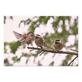 Chickadees de bébé et oiseau de mère photographie