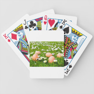 Chicken eggs in grass with daisies bicycle playing cards