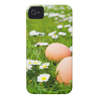 Chicken eggs in grass with daisies Case-Mate iPhone 4 cases