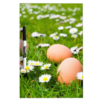 Chicken eggs in grass with daisies dry erase board
