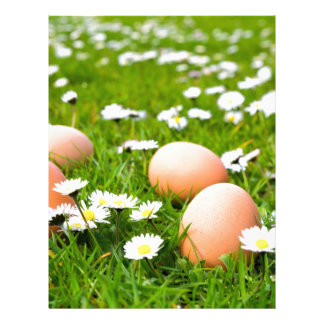 Chicken eggs in grass with daisies letterhead
