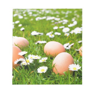 Chicken eggs in grass with daisies notepad