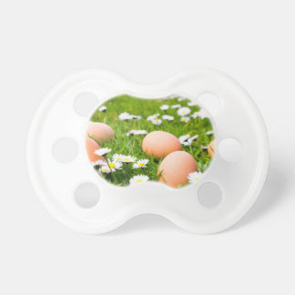 Chicken eggs in grass with daisies pacifiers