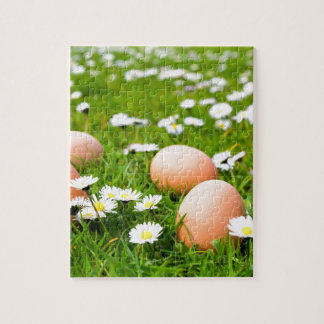 Chicken eggs in grass with daisies puzzles