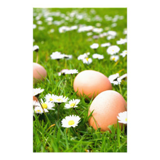 Chicken eggs in grass with daisies stationery