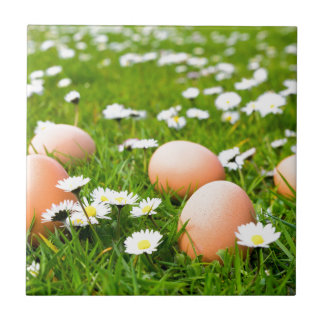 Chicken eggs in grass with daisies tile
