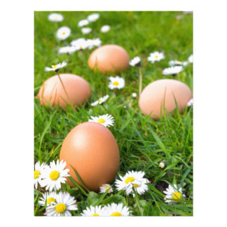Chicken eggs in spring grass with daisies custom letterhead