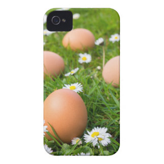 Chicken eggs in spring grass with daisies iPhone 4 cases