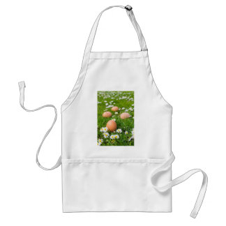 Chicken eggs in spring grass with daisies standard apron