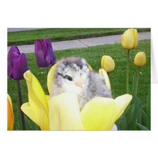 chicken in a tulip card