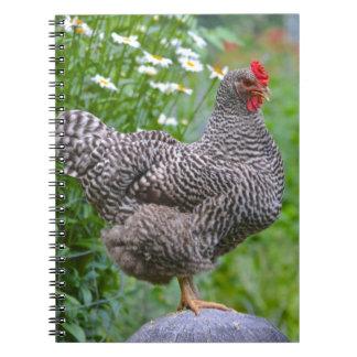 Chicken Notebook