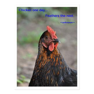 Chicken Wisdom - Feathers Postcard