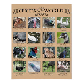 Chickens of the World Humorous Poster