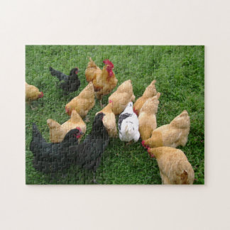 Chickens Roosters Hens Flock Puzzles