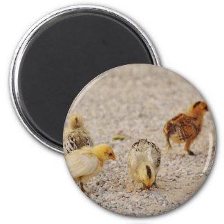 Chicks #2 magnet