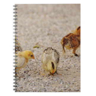 Chicks #2 spiral note book