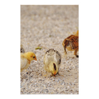 Chicks #2 stationery