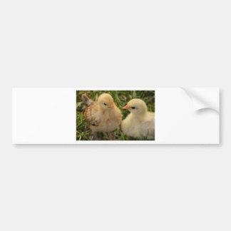 Chicks Bumper Sticker