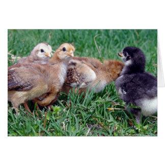 Chicks Card