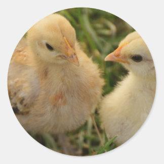 Chicks Classic Round Sticker