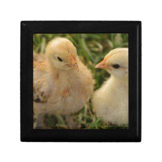 Chicks Gift Box