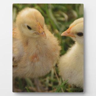 Chicks Plaque