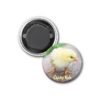 Chicks Rule Cute Baby Chicken Lover Round Magnet