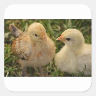 Chicks Square Sticker
