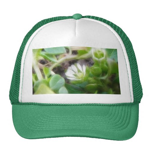 Chickweed (Stellaria media) Flowers Mesh Hats