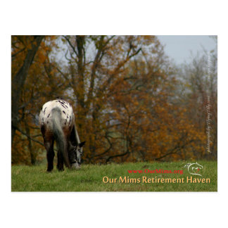 Chief - Appaloosa in the move Prancer Postcard