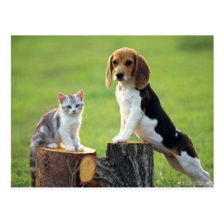 Chien de beagle et chaton tigré gris carte postale