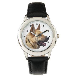 Chien de berger allemand alsacien montres