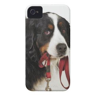 Chien de montagne de Bernese (Berner Sennenhund) Coques iPhone 4 Case-Mate