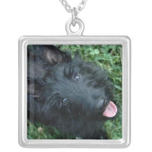Chien de Scotty de collier de Terrier d'écossais