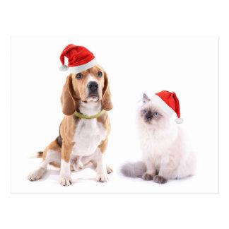 Chien et chaton mignons avec des chapeaux de Noël Cartes Postales