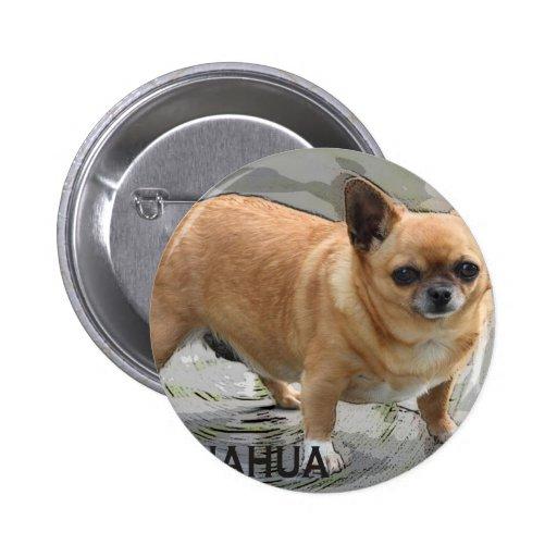Chihuahua   チワワ  чихуахуа צ'יוואווה pins