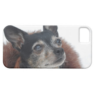 chihuahua-4 iPhone 5 cover